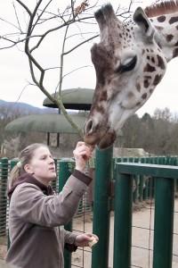 Žirafa (3)