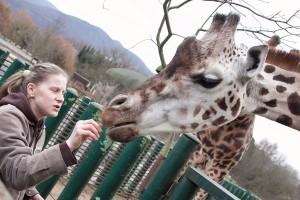 Žirafa (5)