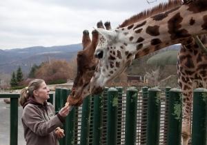 Žirafa (7)
