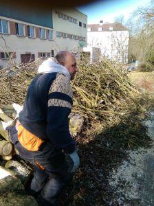 Kácení stromů Foto Luboš Hostek (11)