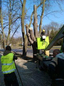 Kácení stromů Foto Luboš Hostek (12)