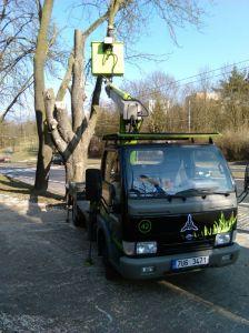 Kácení stromů Foto Luboš Hostek (13)