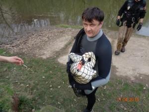 labuť (3)