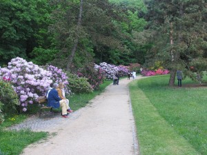 Výstava rododendronů (12)