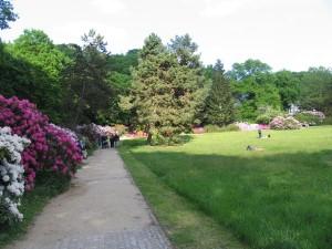 Výstava rododendronů (13)