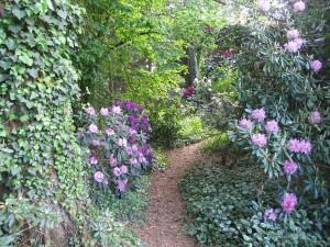 Výstava rododendronů (15)
