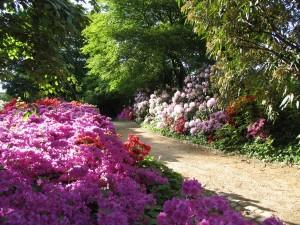 Výstava rododendronů (2)