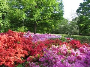 Výstava rododendronů (5)