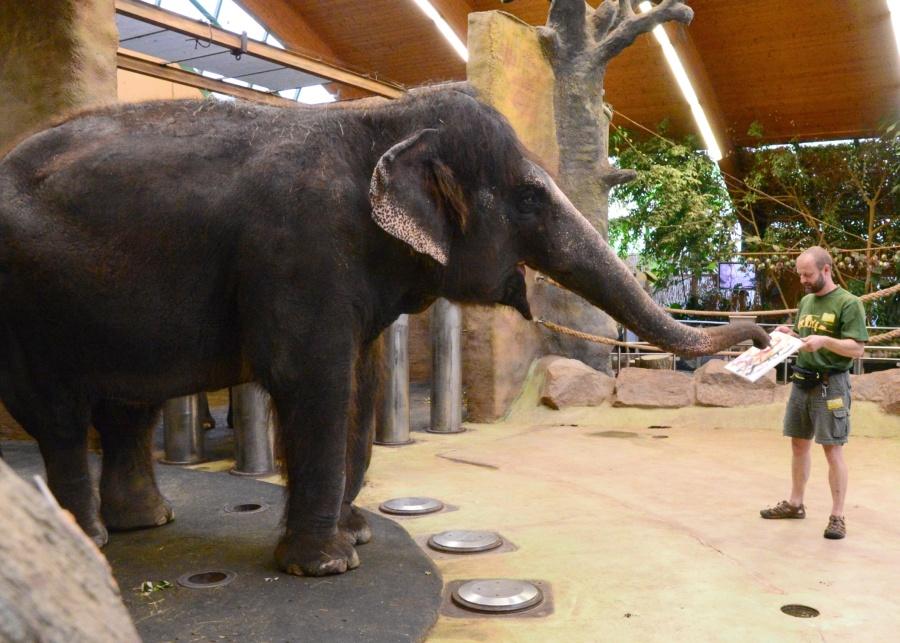 Sloní malování - Kala